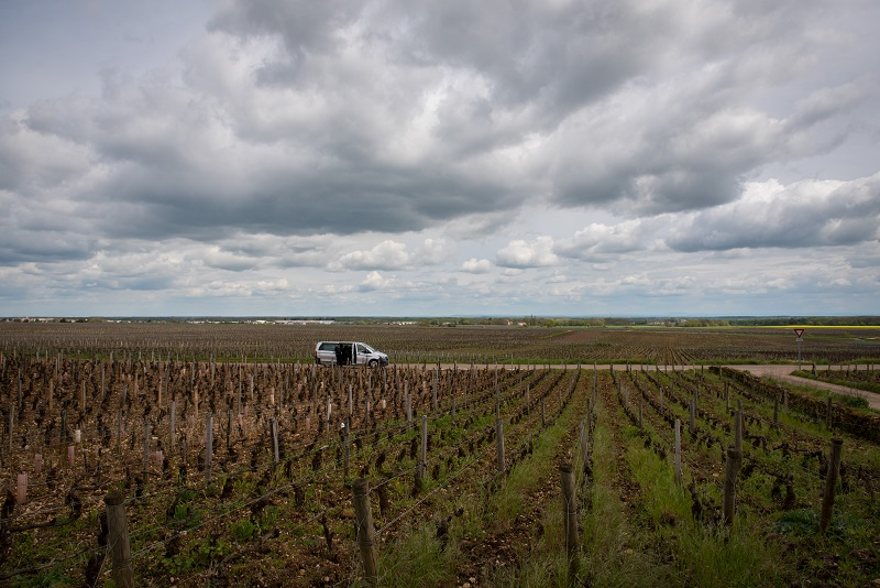 Gevrey Safely In Burgundy